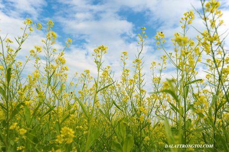 Nhung canh dong hoa cai dep ngan ngo tu Bac vao Nam - Anh 9