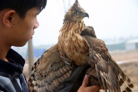 Hao hung voi hoi thi chim o Ha Noi - Anh 14
