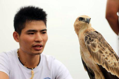 Hao hung voi hoi thi chim o Ha Noi - Anh 2