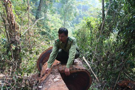Rung nghien co thu bi 'xe thit' khong thuong tiec o Ha Giang - Anh 9