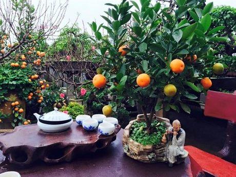 Muon loai hoa qua canh doc dao don Tet Dinh Dau 2017 - Anh 8