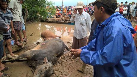 Toan canh Phu Yen hoang tan sau lu du - Anh 1
