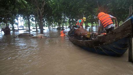 Toan canh Phu Yen hoang tan sau lu du - Anh 7