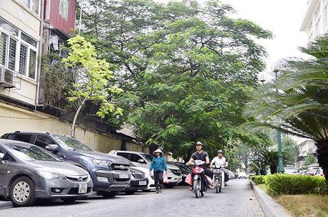 Pho 19-12 duoc chon lam pho sach Ha Noi - Anh 2