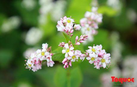 Se co Le hoi hoa tam giac mach giua long Ha Noi - Anh 1