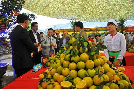Hoi cho Nong nghiep - Du lich - Thuong mai vung Tay Bac 2016 - Anh 2