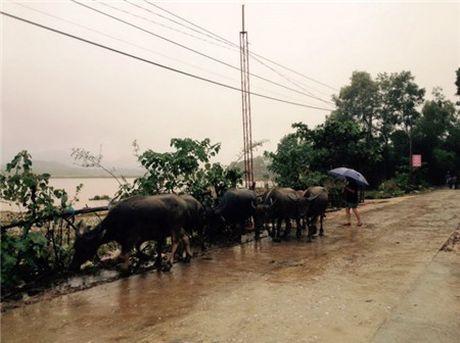 Ho Ke Go, thuy dien Ho Ho thong bao tang xa nuoc - Anh 1