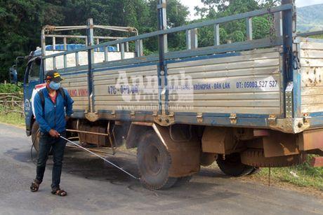 Dak Lak: Bung phat dich lo mom long mong tren dan gia suc - Anh 1