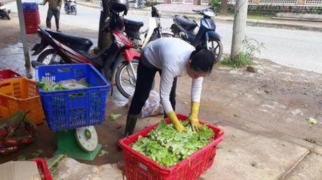 'Thu phu rau' Da Lat khan hang, gia tang dot bien - Anh 1