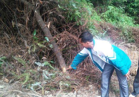 Thanh Hoa: Ngang nhien muc dat trong khu bao ton - Anh 3