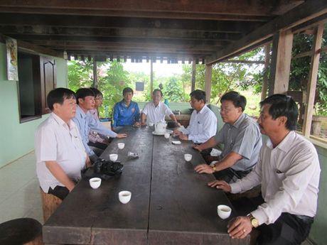 Nhung vuon cay cao su nghia tinh tai Campuchia - Anh 1