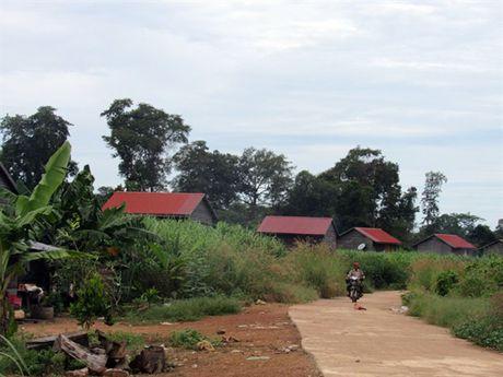 Nhung vuon cay cao su nghia tinh tai Campuchia - Anh 6