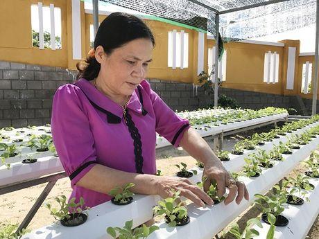 Quang Ngai: Ngam nhung vuon rau xinh xan cho be mam non o dao tien tieu - Anh 1