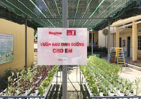 Quang Ngai: Ngam nhung vuon rau xinh xan cho be mam non o dao tien tieu - Anh 2