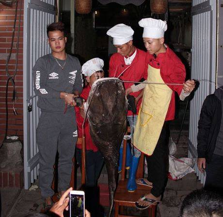 Them mot 'thuy quai' song Me Kong xuat hien o Ha Noi - Anh 2