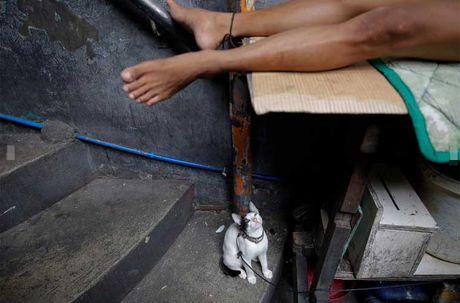 Canh chen chuc trong nha tu Philippines 'qua tai' - Anh 8