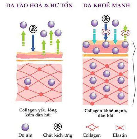 """""""Lam dep da – Nhan qua khung"""" voi collagen thuy phan - Anh 2"""