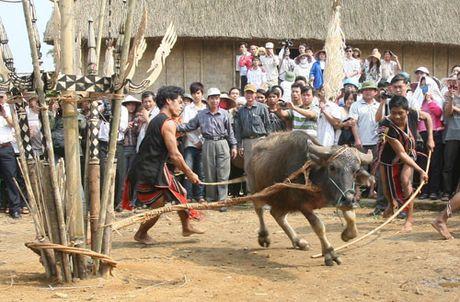 Lam Dong dung dam trau trong le hoi truyen thong - Anh 1