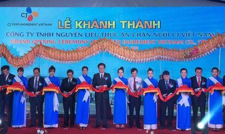 CJ khanh thanh nha may nguyen lieu thuc an chan nuoi tai Ba Ria Vung Tau - Anh 1