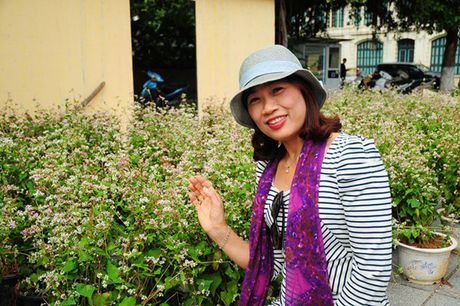 Hoa tam giac mach lan dau khoe sac o pho di bo Ho Guom - Anh 5