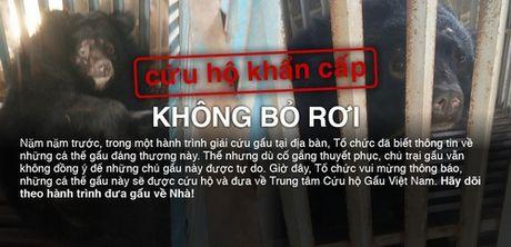 Cuu ho bon ca the gau ngua tai Gia Lai - Anh 1