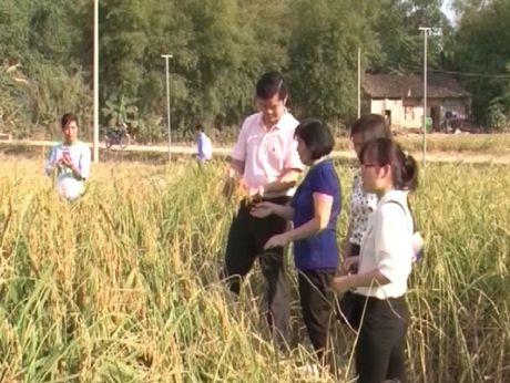 Cao Bang: Thanh cong lien ket bon nha trong san xuat va tieu thu nong san - Anh 1