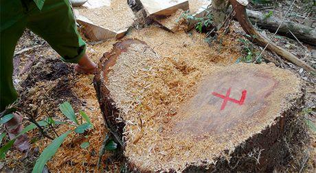 Quang Nam: Ky luat hang loat can bo, si quan vu pha rung po mu - Anh 3