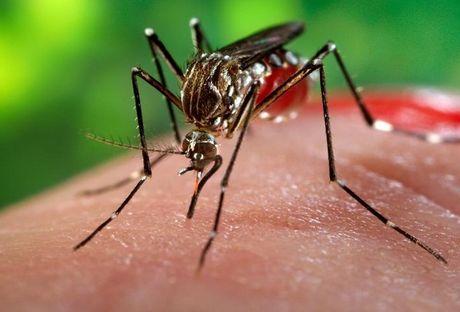 Tin moi nhat ve dich benh vius Zika o TP. HCM - Anh 1