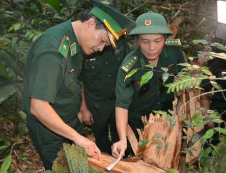 Quang Nam: Ky luat hang loat ca nhan vu pha rung po mu - Anh 3