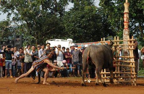 Le dam trau da bien thai - Anh 1