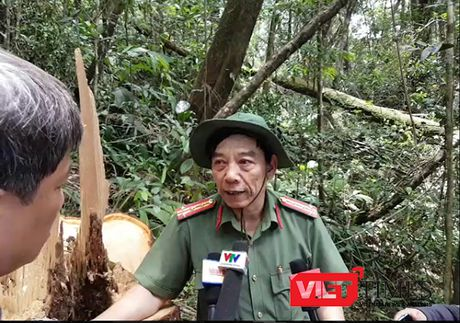 Vu pha rung Pomu o Quang Nam: 3 to chuc, 7 ca nhan bi ky luat ve Dang - Anh 2