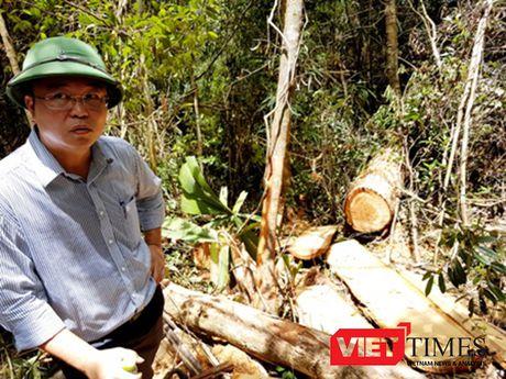 Vu pha rung Pomu o Quang Nam: 3 to chuc, 7 ca nhan bi ky luat ve Dang - Anh 3