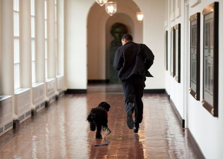 Nhin lai nhung khoanh khac an tuong cua tong thong Obama - Anh 4