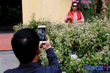 Ngo ngang truoc ve dep cua hoa tam giac mach khoe sac giua Ha Noi - Anh 10