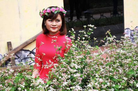 Ngo ngang truoc ve dep cua hoa tam giac mach khoe sac giua Ha Noi - Anh 11