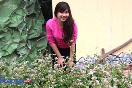 Ngo ngang truoc ve dep cua hoa tam giac mach khoe sac giua Ha Noi - Anh 12