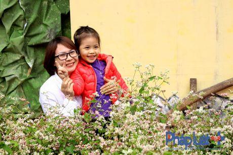 Ngo ngang truoc ve dep cua hoa tam giac mach khoe sac giua Ha Noi - Anh 13