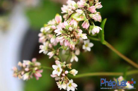 Ngo ngang truoc ve dep cua hoa tam giac mach khoe sac giua Ha Noi - Anh 2