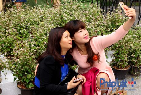 Ngo ngang truoc ve dep cua hoa tam giac mach khoe sac giua Ha Noi - Anh 5