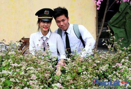 Ngo ngang truoc ve dep cua hoa tam giac mach khoe sac giua Ha Noi - Anh 7