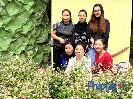 Ngo ngang truoc ve dep cua hoa tam giac mach khoe sac giua Ha Noi - Anh 8