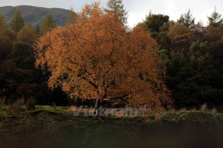 Ngo ngang voi ve dep tho mong cua Lake District khi vao Thu - Anh 5