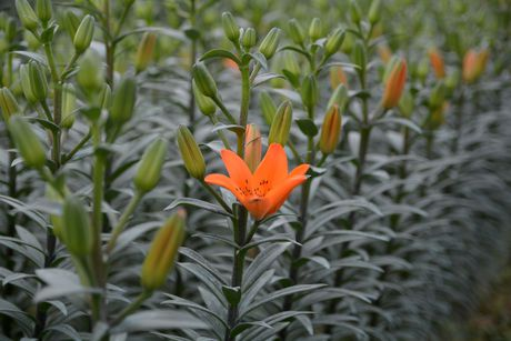 Mach ban cach chon trong hoa no dung dip Tet - Anh 12