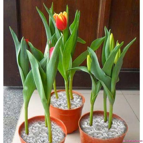Mach ban cach chon trong hoa no dung dip Tet - Anh 1