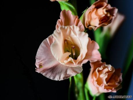 Mach ban cach chon trong hoa no dung dip Tet - Anh 2