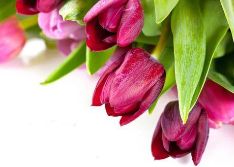 Mach ban cach chon trong hoa no dung dip Tet - Anh 3