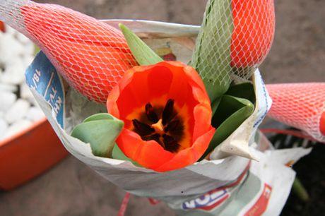 Mach ban cach chon trong hoa no dung dip Tet - Anh 5