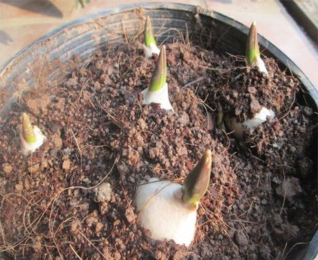 Mach ban cach chon trong hoa no dung dip Tet - Anh 7