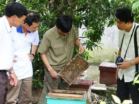 Mat ong bac ha Meo Vac: Can giu chat luong theo thuong hieu dang ky - Anh 1
