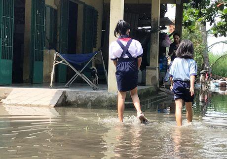 Nong dan Sai Gon bat ngo mat tien ty vi vo de bao - Anh 1